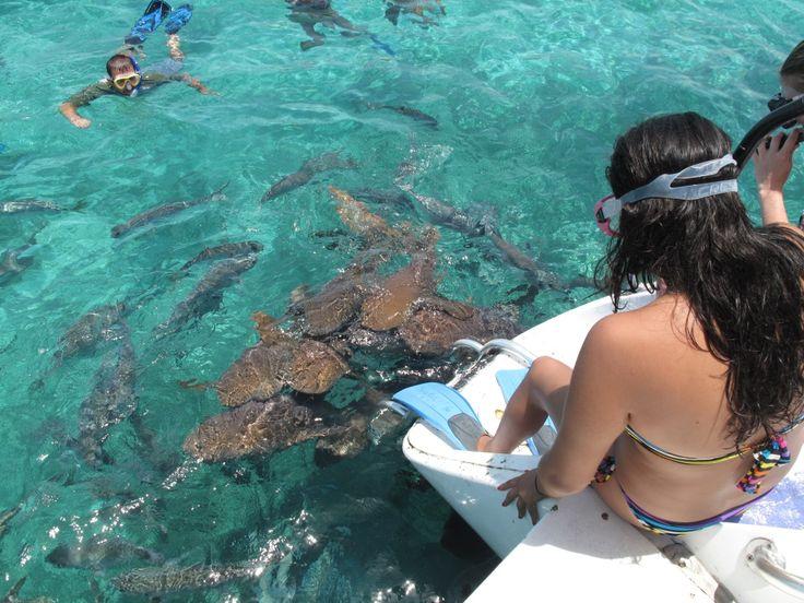 San Pedro Snorkel Adventure